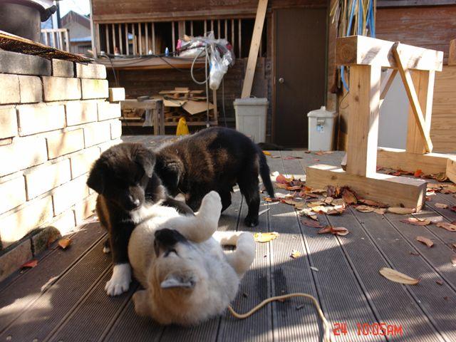 http://www.kokudo.jp/blog/images/DSC00218_R.JPG